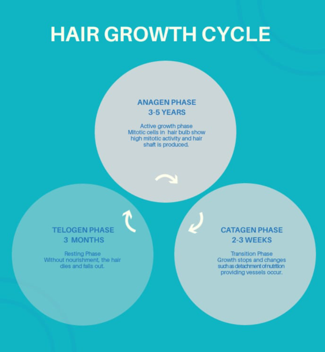 Normal hair growth cycle.