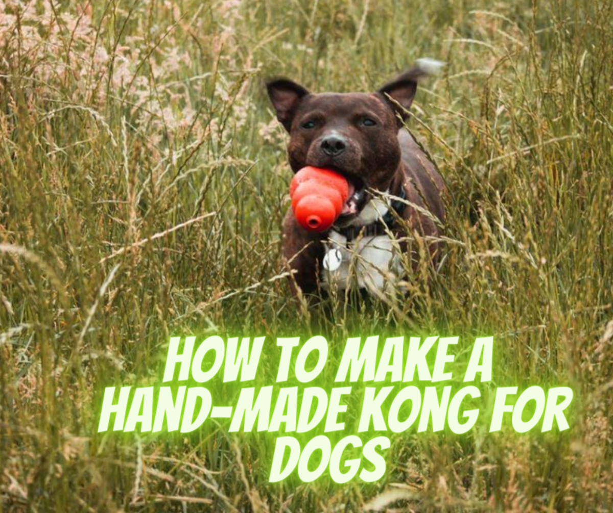 How to Distract/Redirect Dogs Using a Hand-Made Kong