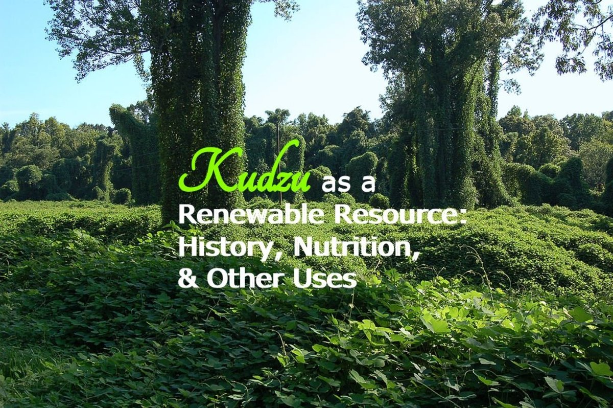 Kudzu as a Renewable Resource: History, Nutrition, & Other Uses