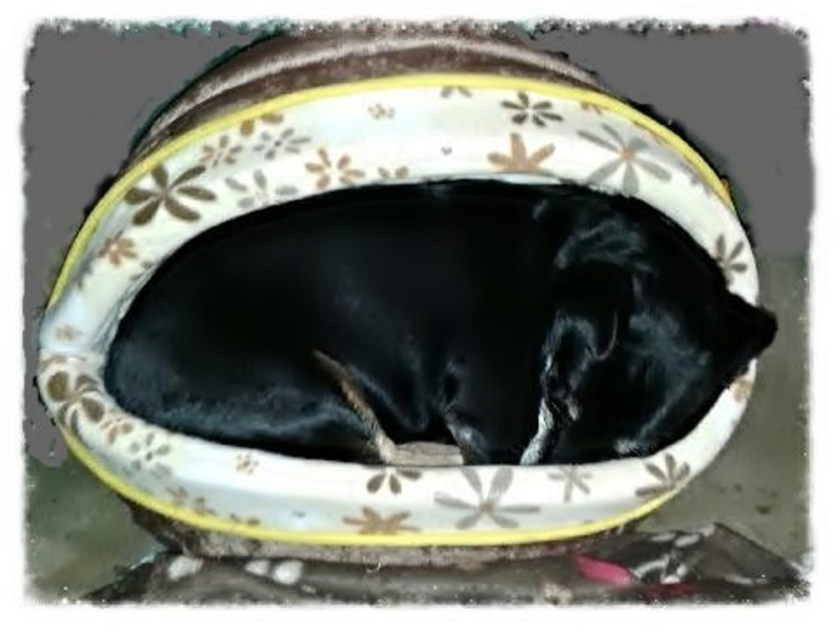 Shadow curled up in his new, warm bed.