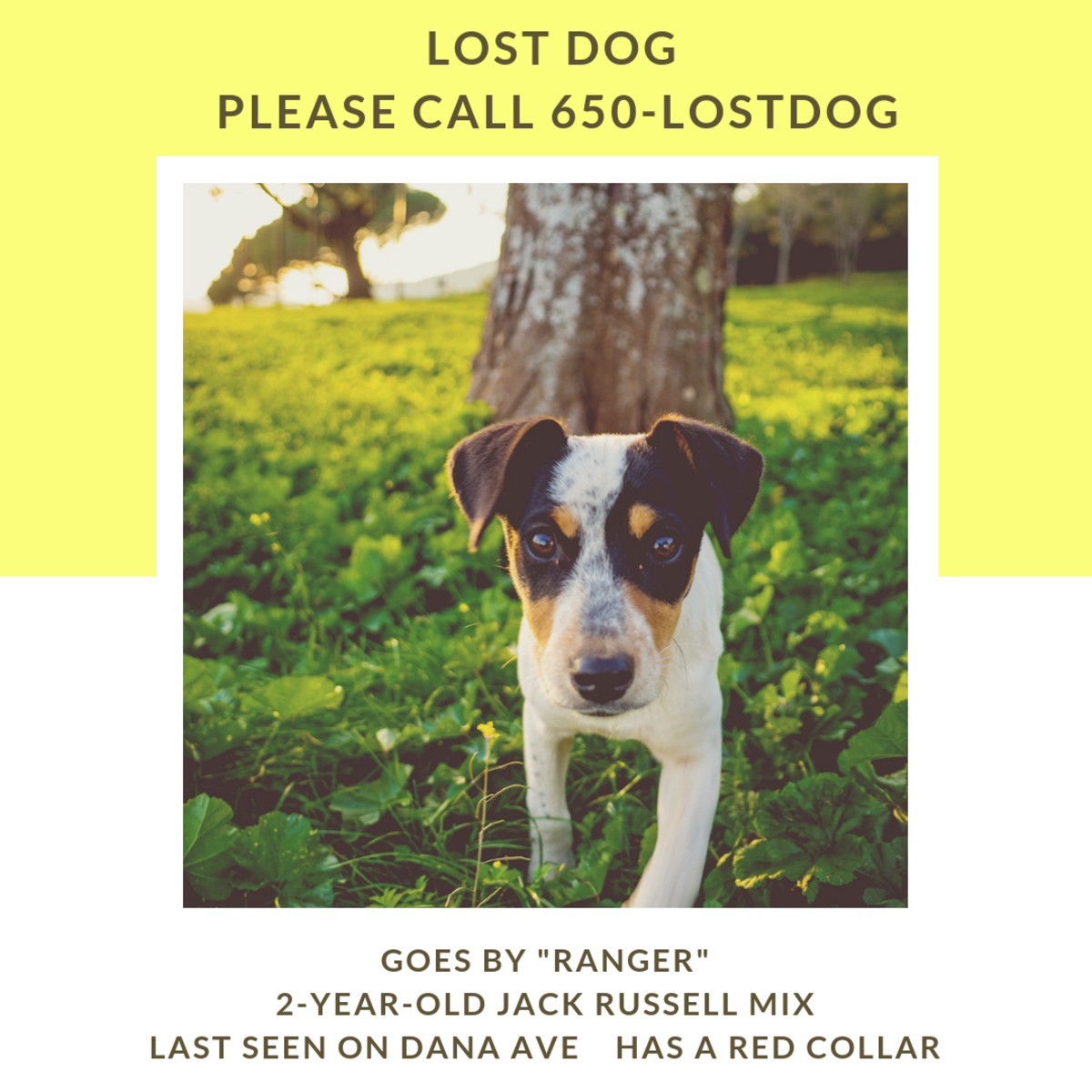 Tips for finding your lost pet as quickly as possible.