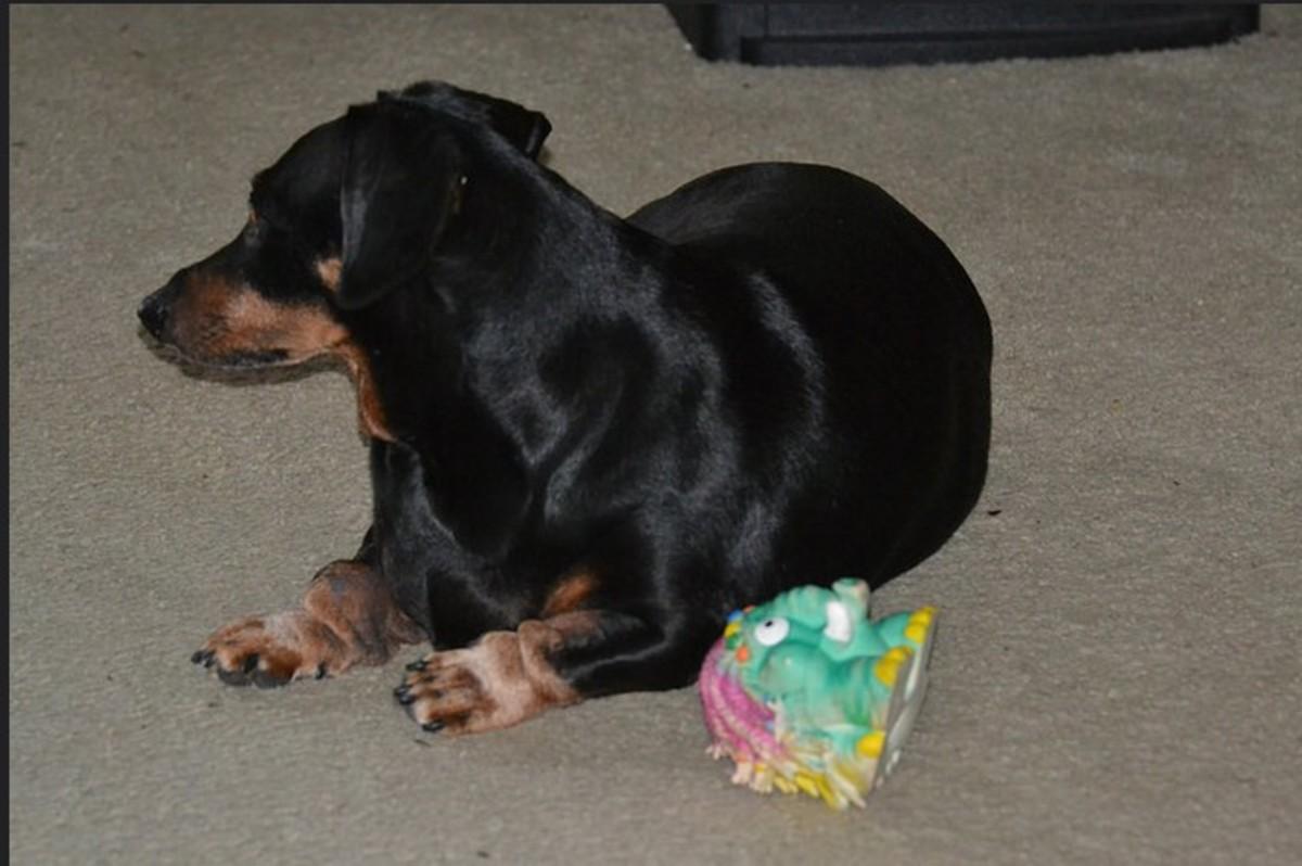 Are Dog Lipomas Cancerous?