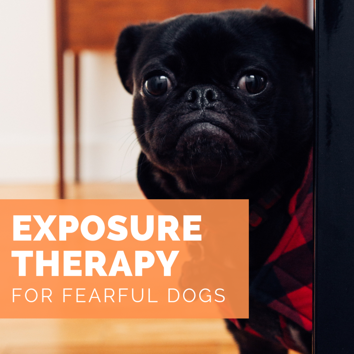 Exposure therapy is commonly used to mitigate human fears and phobias, but did you know it is used with dogs as well?