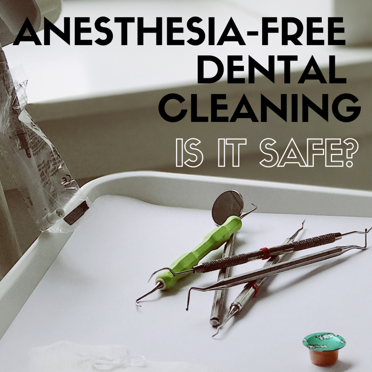 Does your dog need a non-anesthesia dental cleaning?