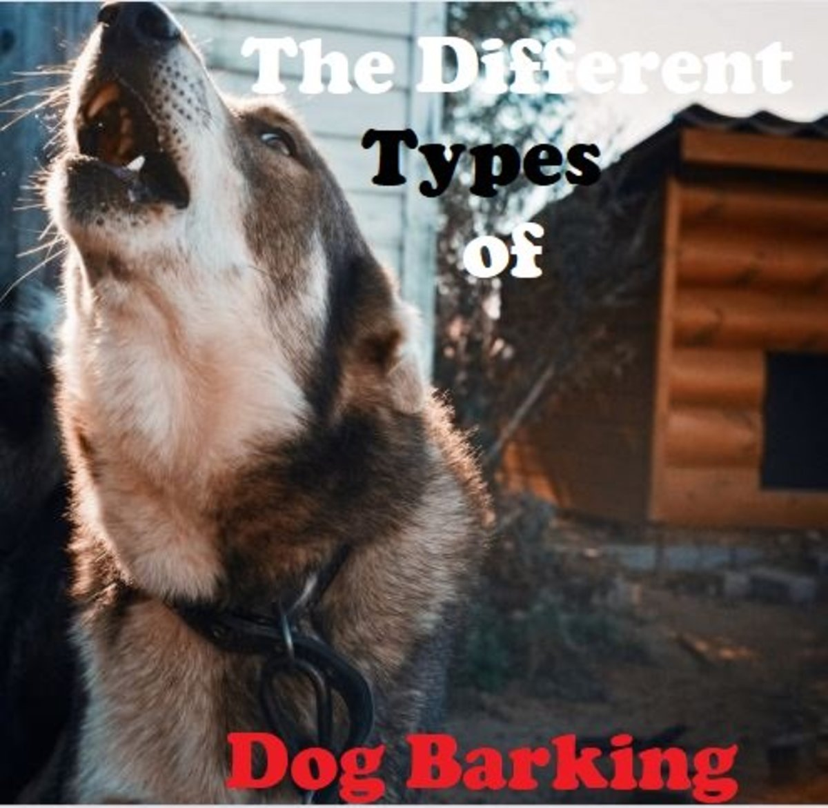 Barking has been attributed to years of domestication.
