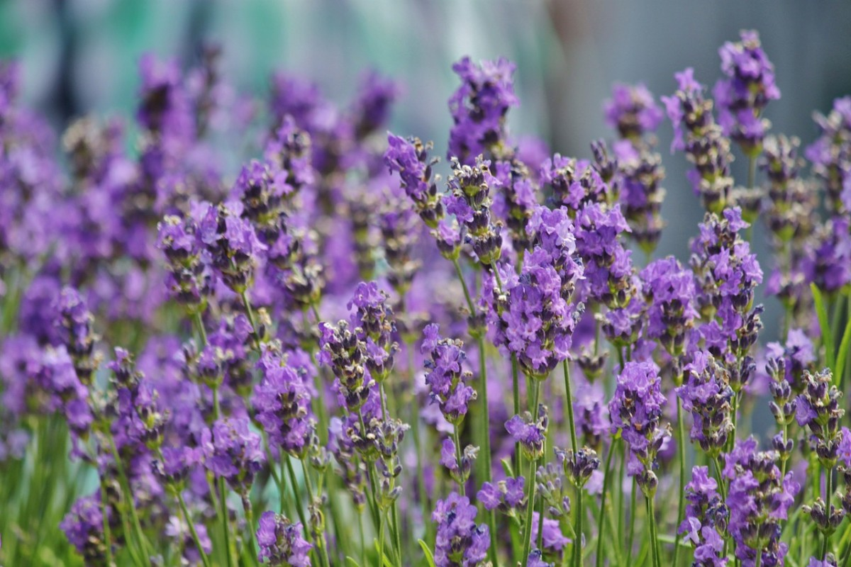 Bath and aromatherapy products that contain Lavender essential oil make thoughtful gifts for people who have a hard time falling asleep.