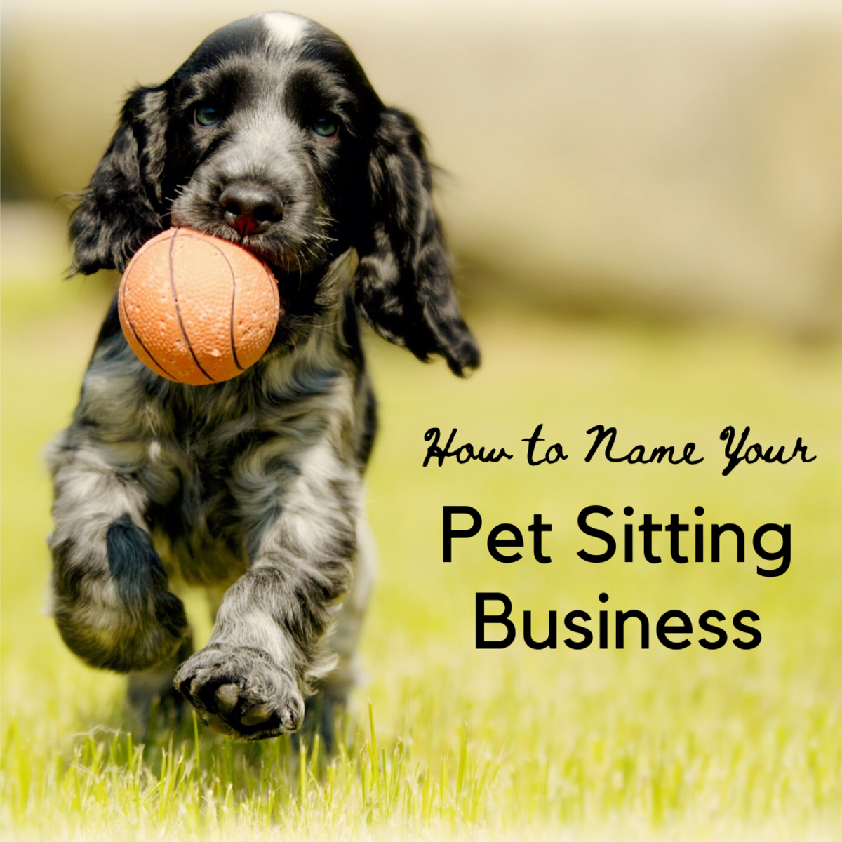 50 Fantastic Pet Sitting Business Name Ideas