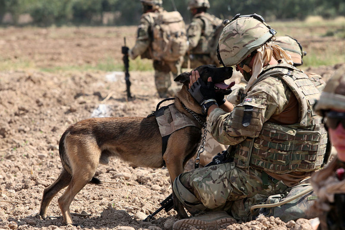 Military Inspired Names for Tough Male Dogs