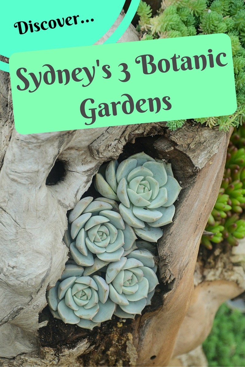 Sydney Attractions: The 3 Botanic Gardens of Sydney