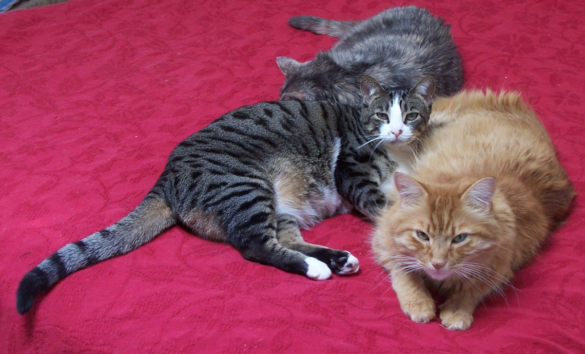 Are cats therapeutic?  We think so. (Only the striped tabby cat is still with us; the other two have crossed the Rainbow Bridge)