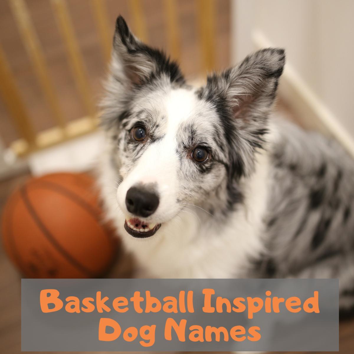 Dog names for basketball fans.