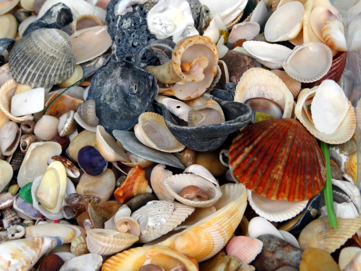 Collection of empty shells