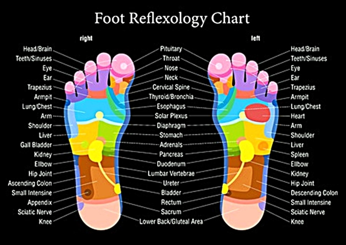 This chart shows the points on the foot that correspond with the various parts of the body
