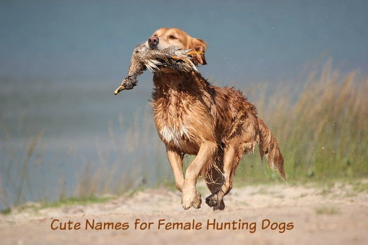 Big Game Hunter's Names Make Clever Names for Retrieving Dogs.
