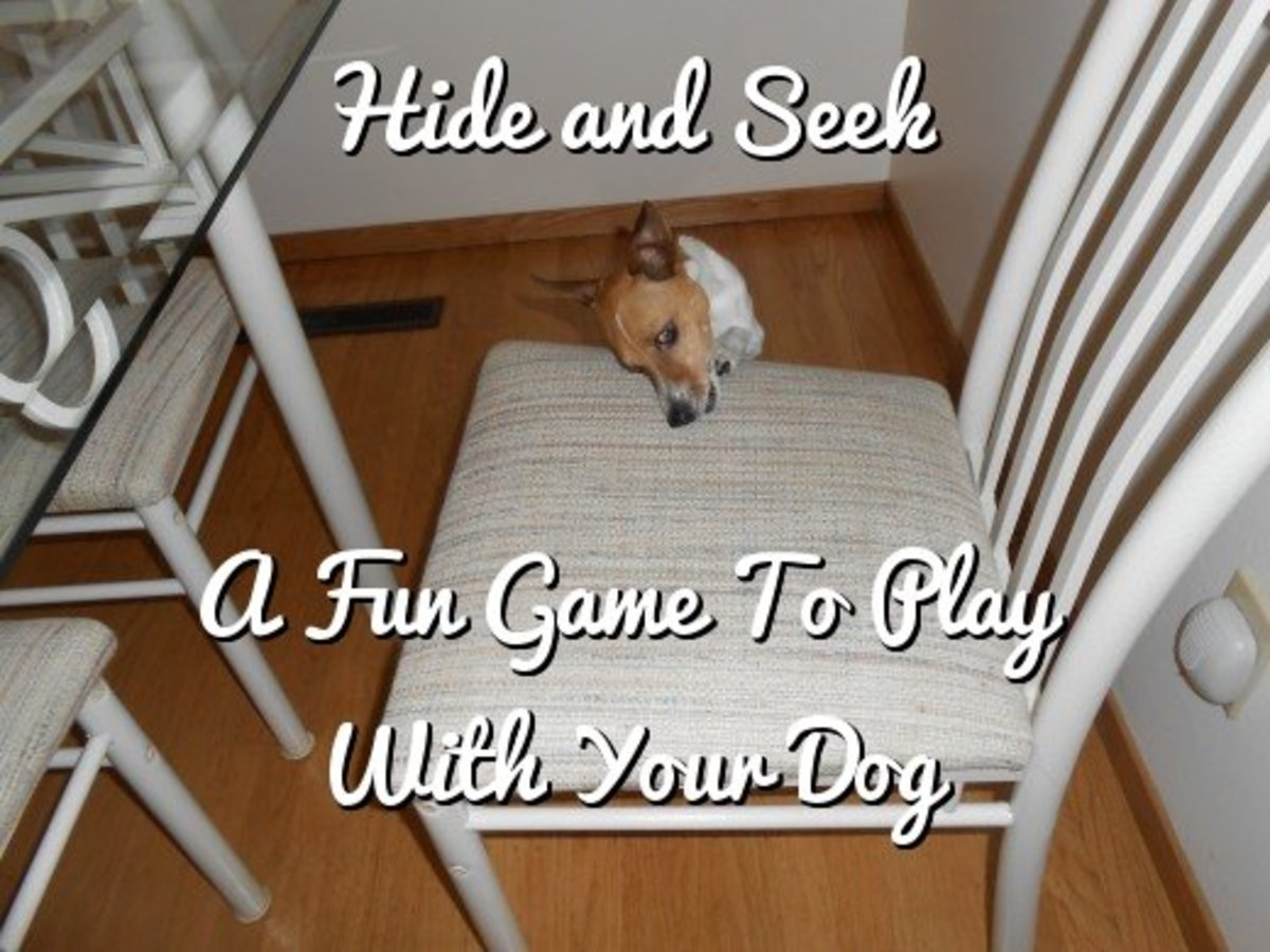Hide-and-Seek:  A Fun Game to Play With Your Dog