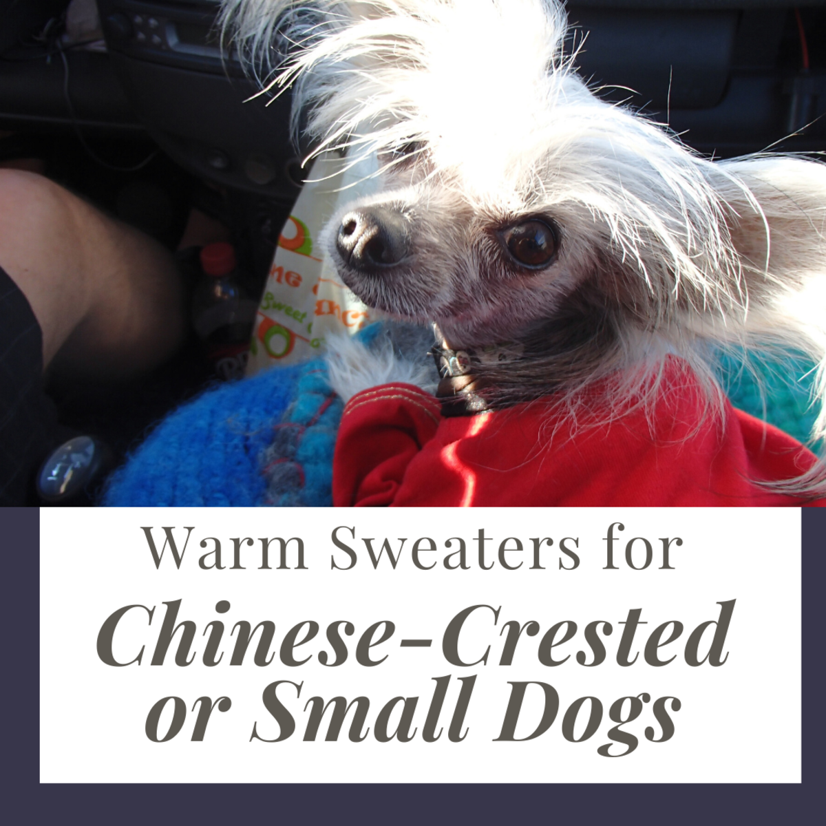 Warm Dog Sweaters for Your Chinese-Crested or Toy Breed