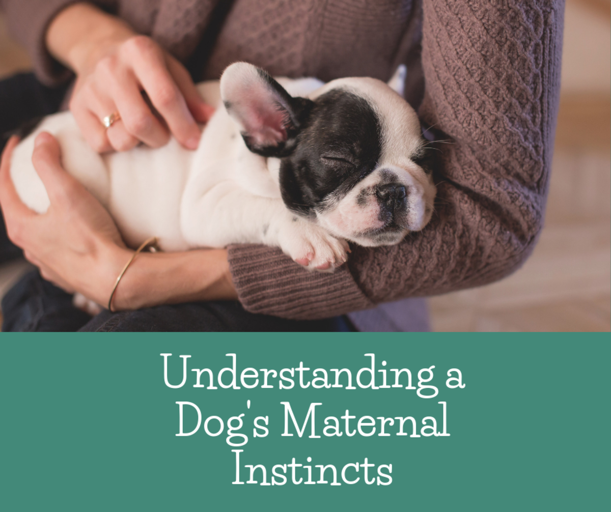 Understanding Dogs' Maternal Instincts: How to Know If Your Dog Is a Good Mother