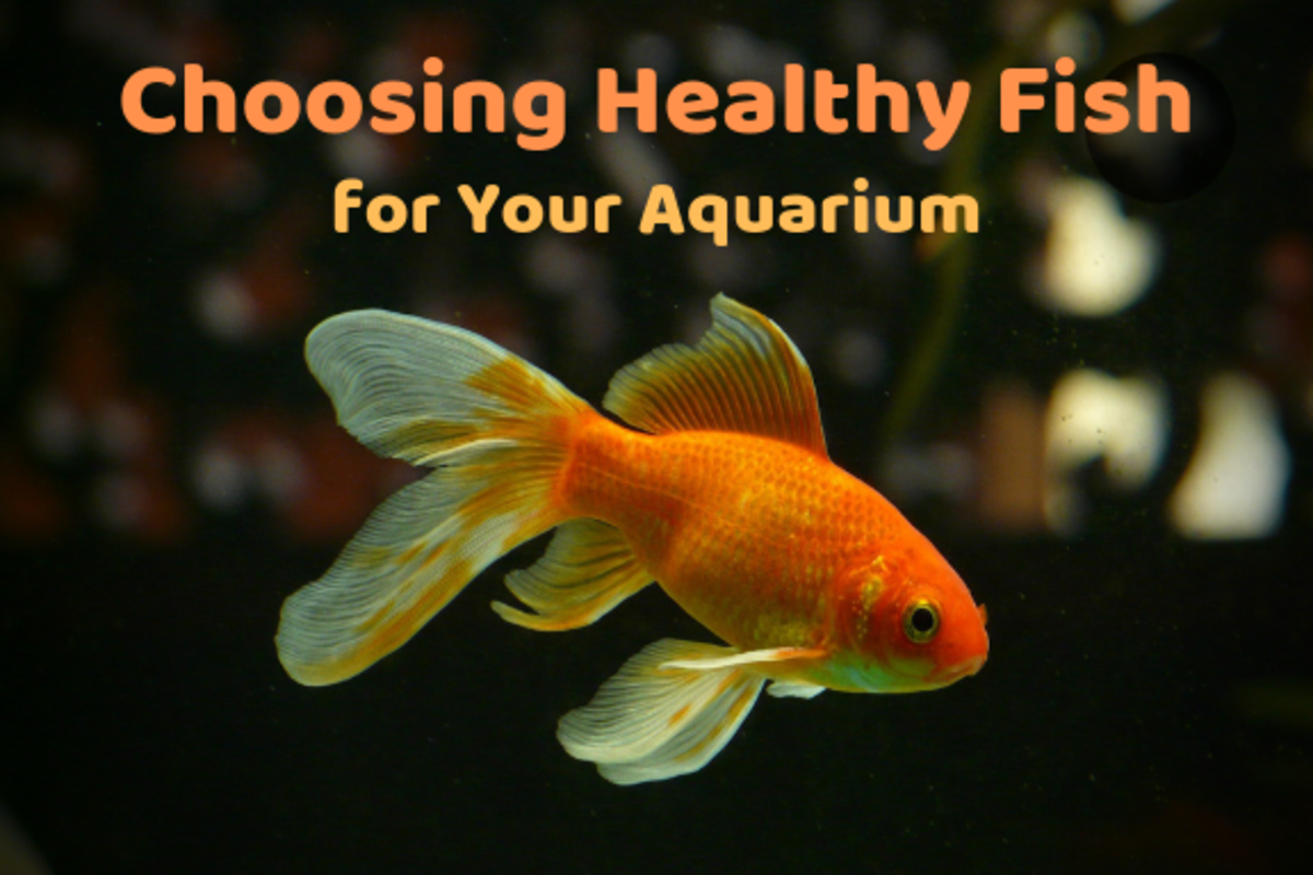 Learn how to recognize the signs of disease and stress in fish.
