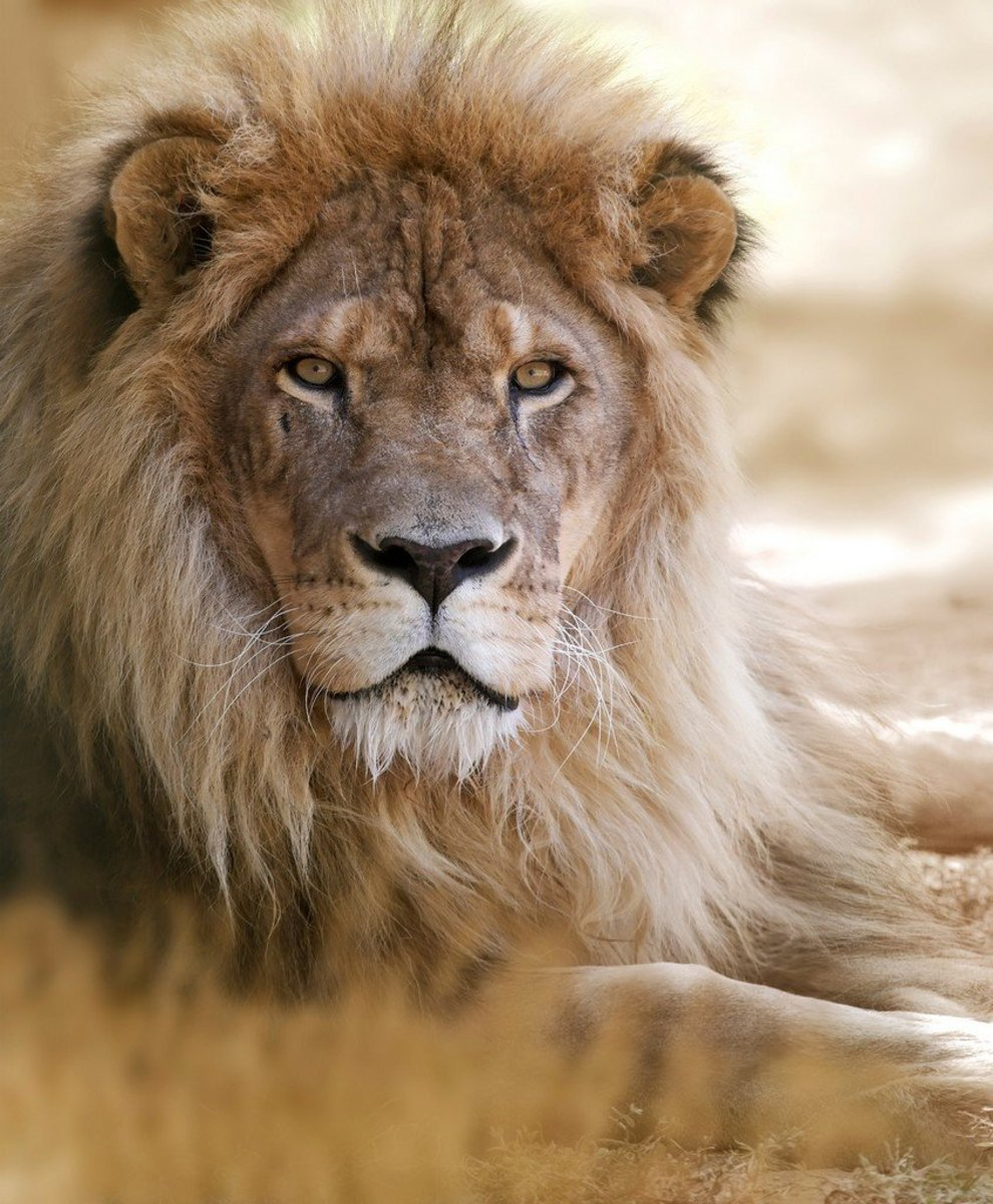 90 Lion Names & Meanings