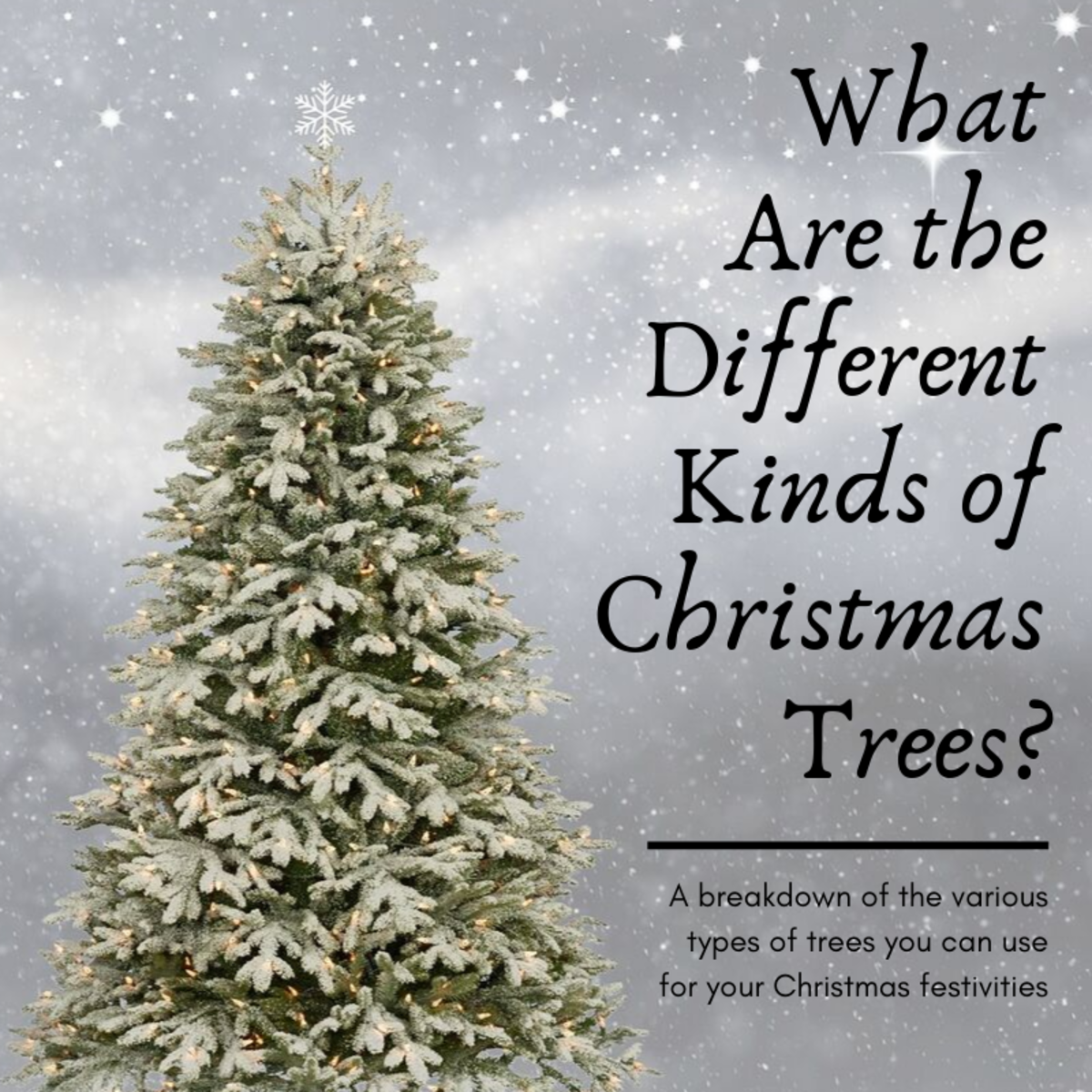 This article will breakdown the main kinds of trees used to celebrate Christmas.