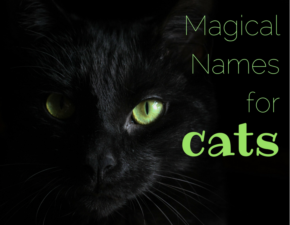 155 Magical Names for Cats