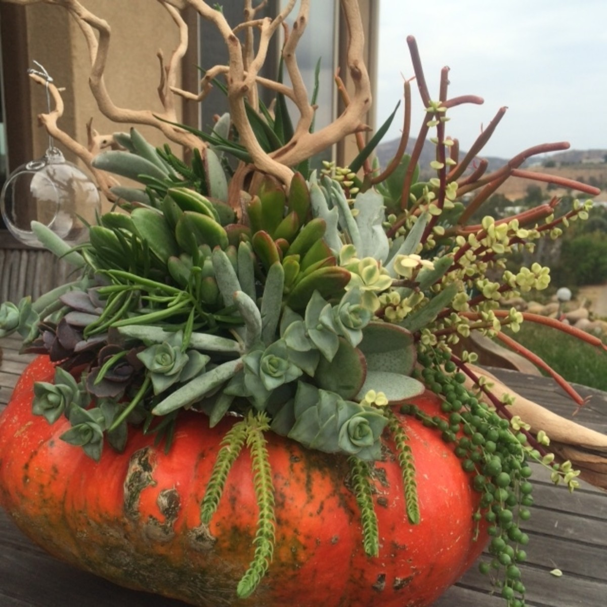 This Thanksgiving succulent centerpiece is all ready to take center stage and hog the limelight.