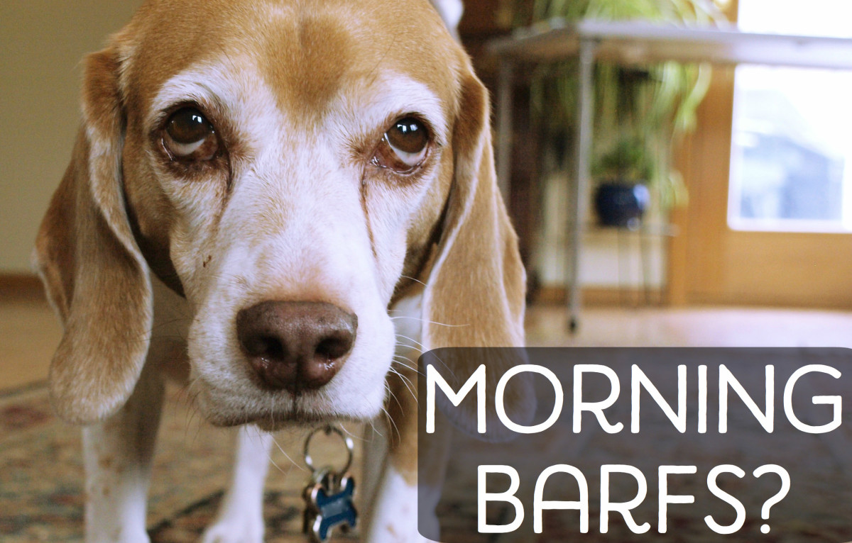 Why Is My Dog Vomiting Bile in the Morning?