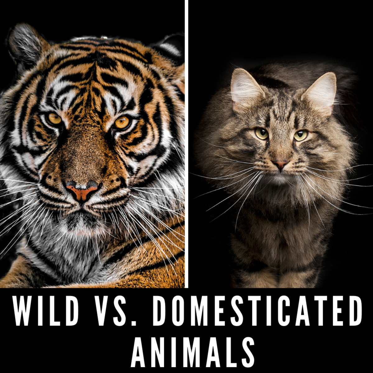 Wild vs. Domesticated Animals: Why Domestication Has Nothing to Do With How Dangerous Pets Are