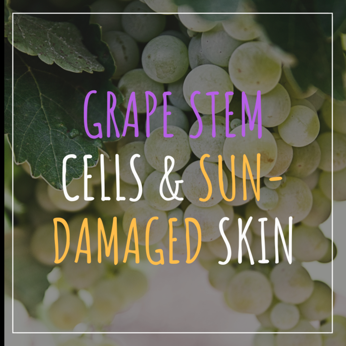 Grape Stem Cell Extract Reverses Signs of Sun Damaged Skin