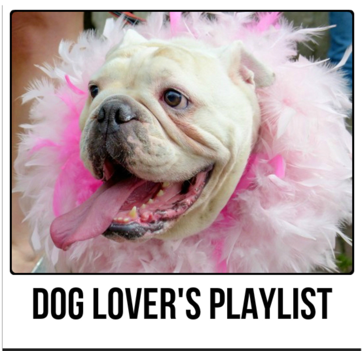 Dog Lover's Playlist:  47 Songs For People Who Love Dogs