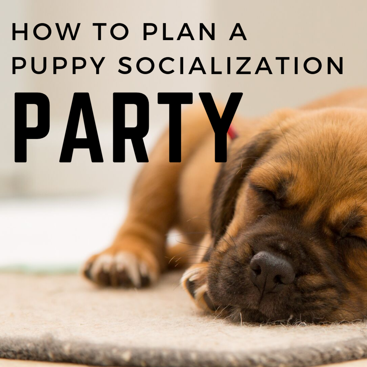 How to organize a puppy socialization party.