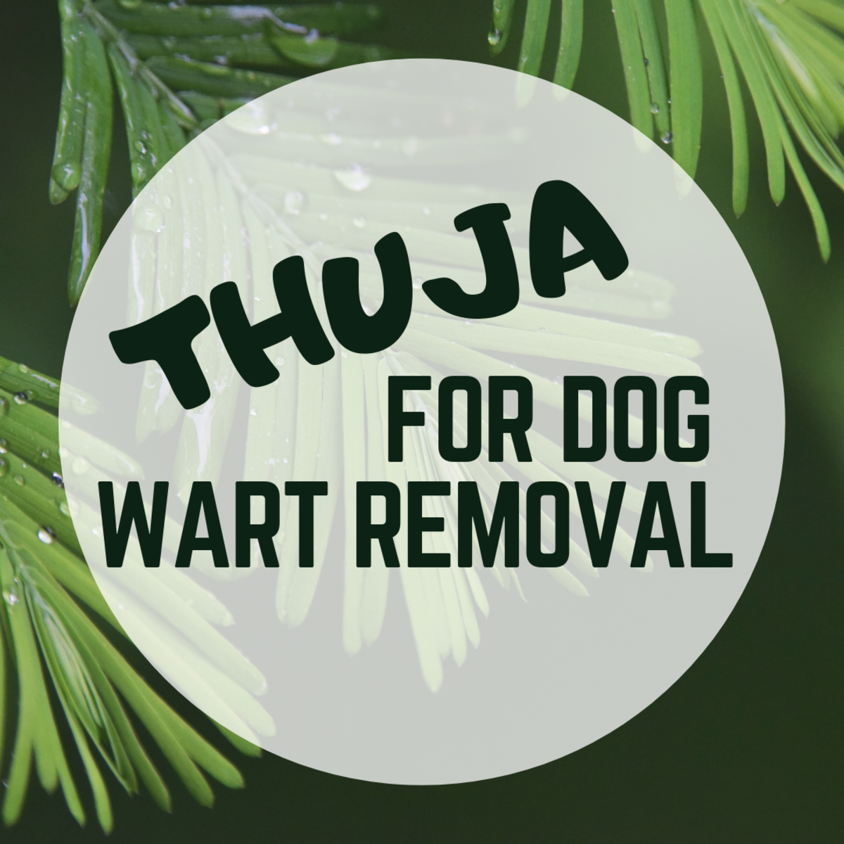 Thuja for Wart Removal in Dogs