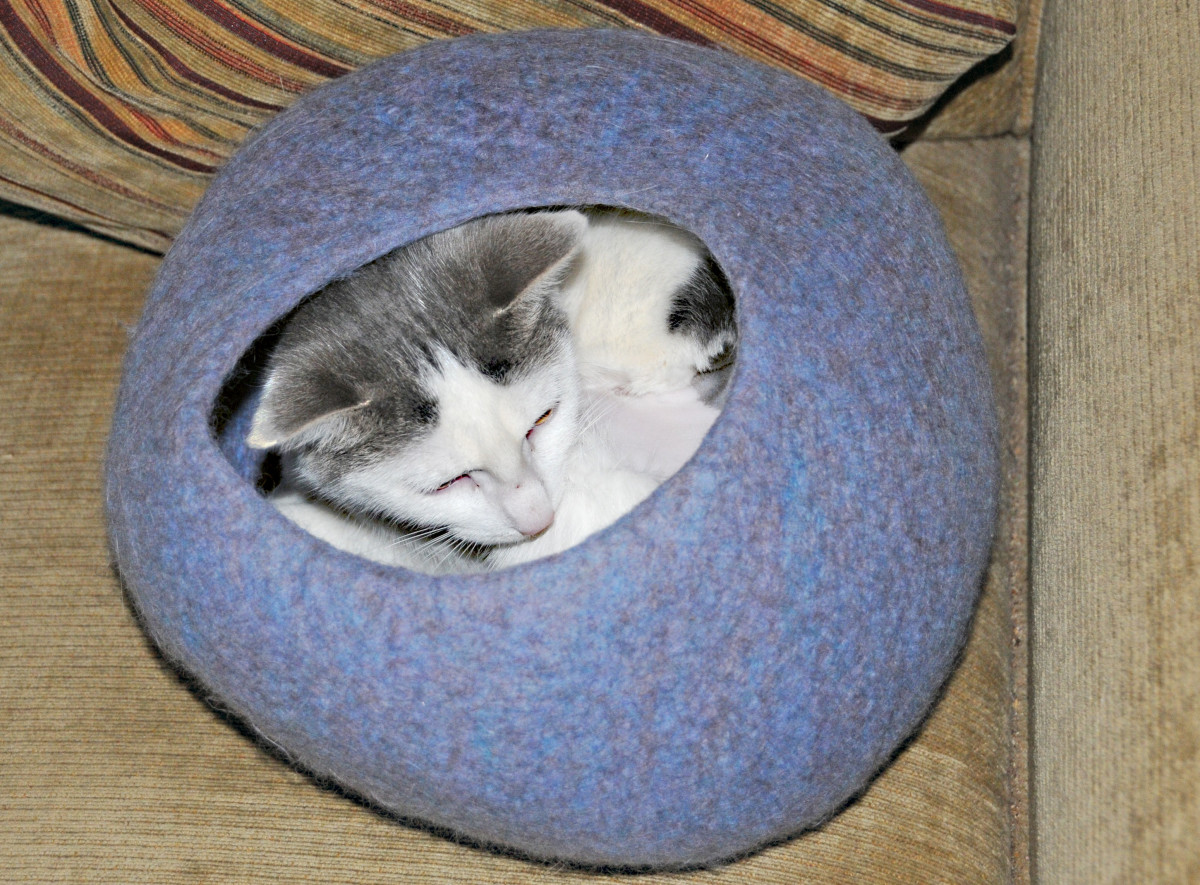 This cat tenant is testing out the new kitty cave.