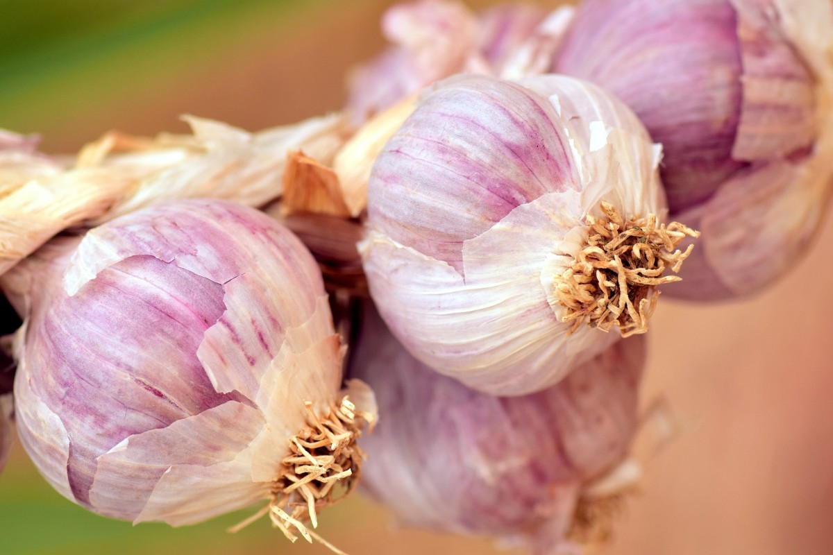 Learn how to grow and cook with garlic