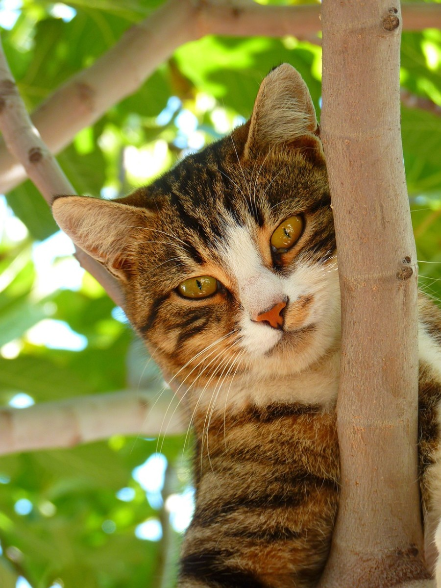 Outdoor cats are at greater risk of contracting FIV.