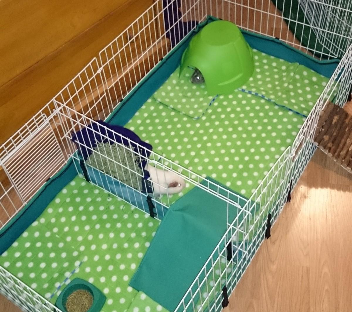 Fleece-lined guinea pig cage.