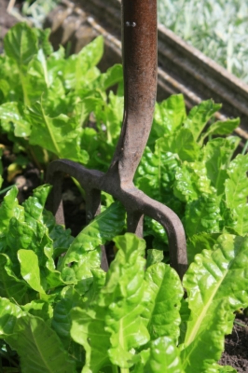 Get More Green by Eating These Four Leafy Green Vegetables