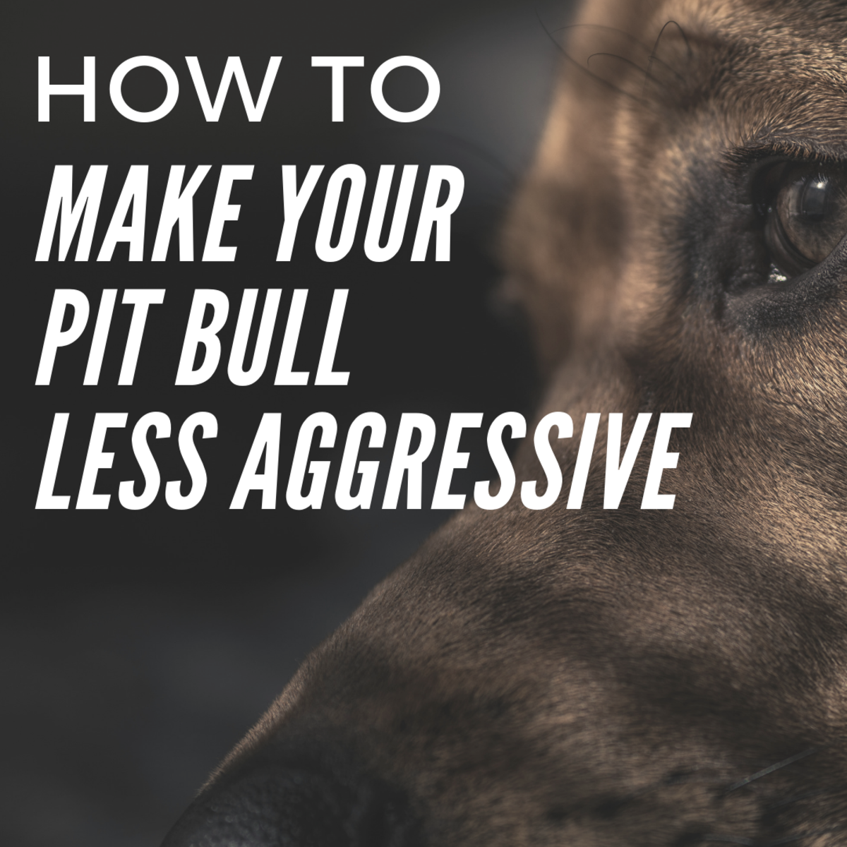 How to Make My Pit Bull Less Aggressive