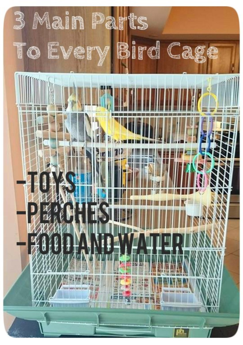 How to set up an effective cage for parakeets, cockatiels, and other small birds.