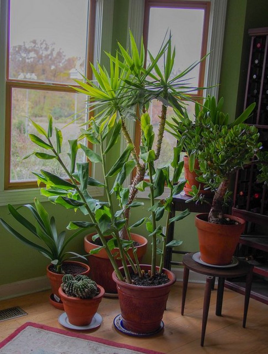 House plants can be used to bring the qualities of plant energy to your crystals.
