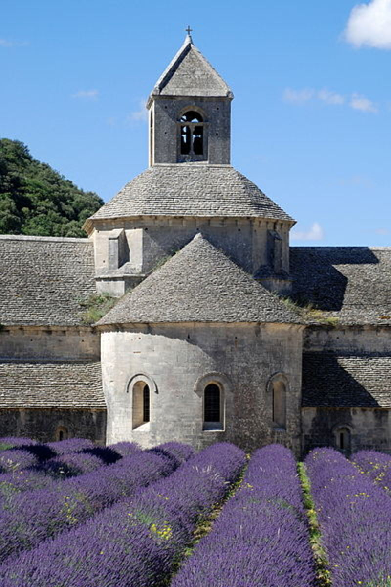 The Cultivation of Lavender in Provence, Southern France.