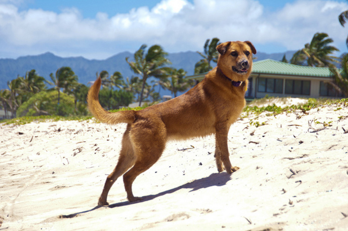 70 Hawaiian Dog Names