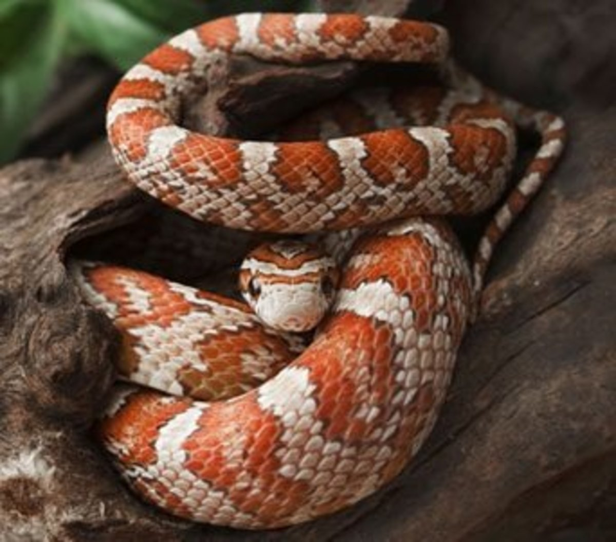 Best Pet Snake Species for Children and Beginners
