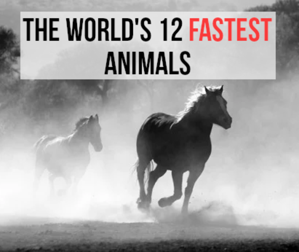 If you want to find out about the fastest animals in the world, read on...