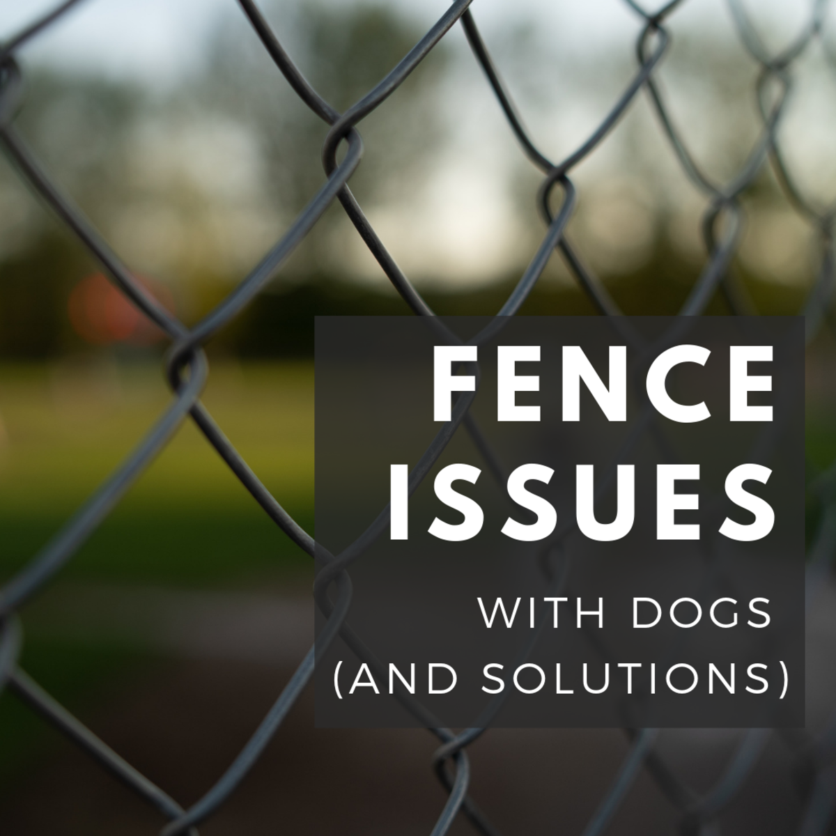 Dogs and Fence Issues