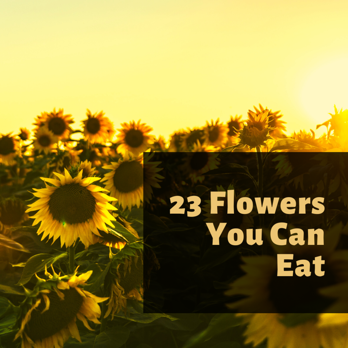 You can eat the buds, petals and seeds of a sunflower.