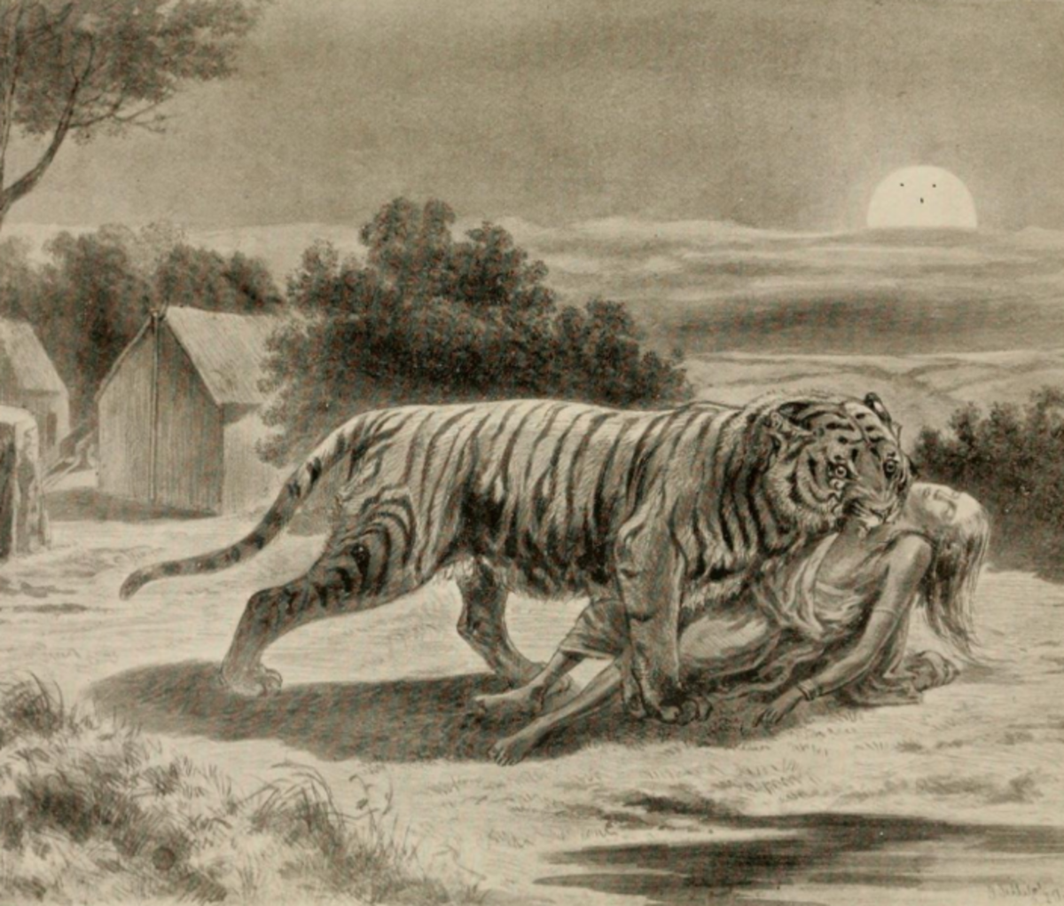 Illustration by George P. Sanderson