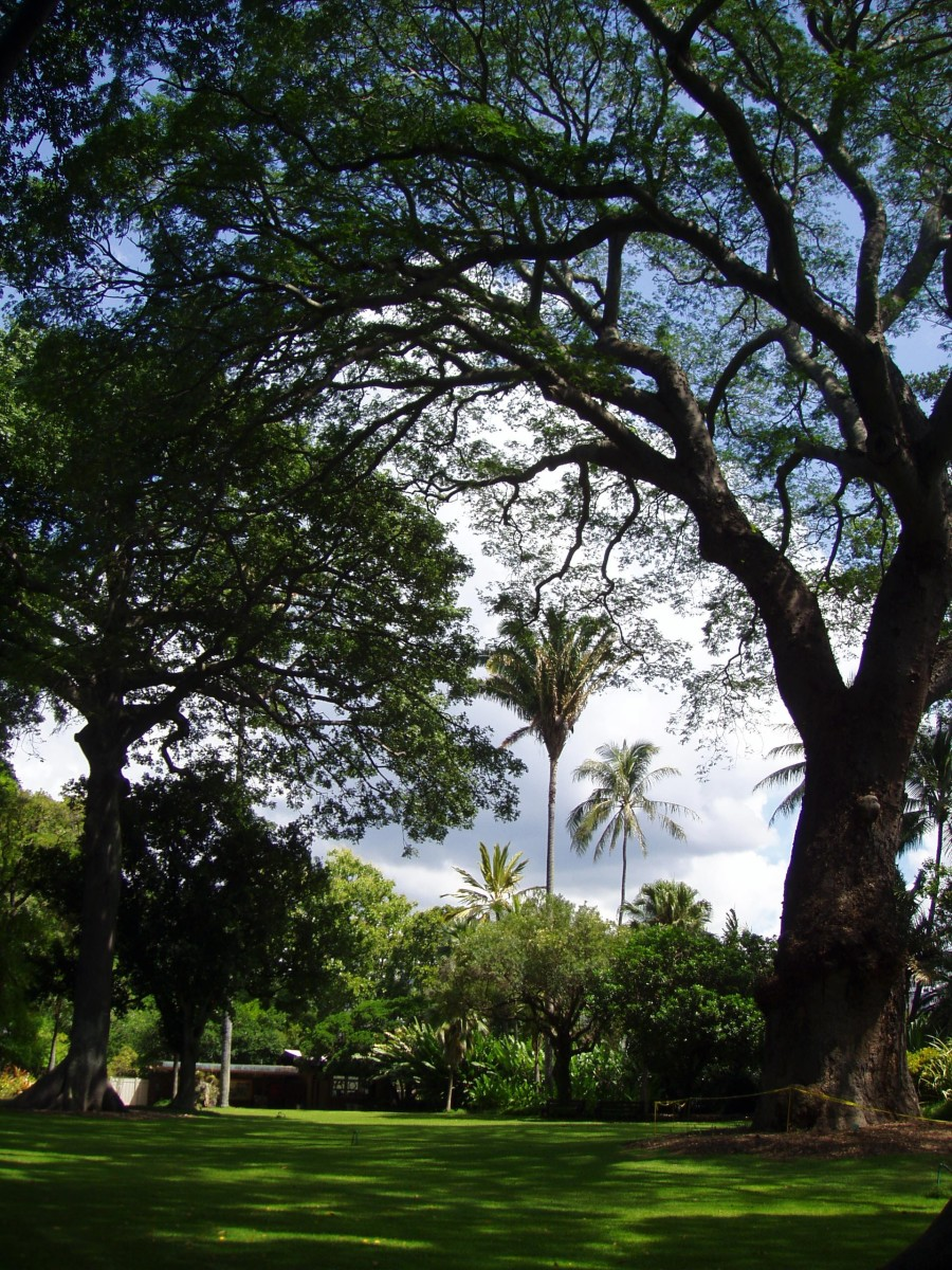 5 Unique Botanical Gardens on Oahu