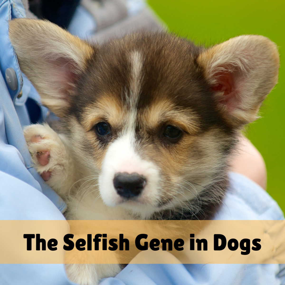 Does the Dog You Adopted Have the Selfish Gene?