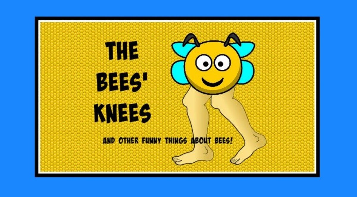 Bee idioms are funny and so are very corny jokes about bees.